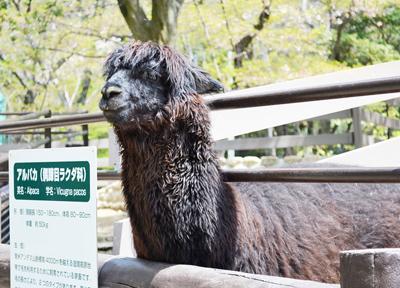 大阪・五月山公園の「アルパカ」