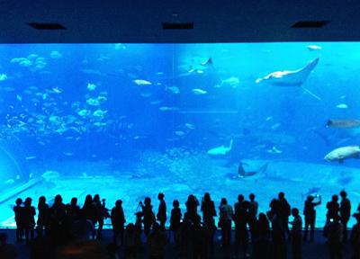 沖縄美ら海水族館のメイン「黒潮の海」大水槽をジンベイザメなどが泳ぐ
