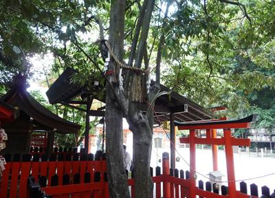 下鴨神社の相生社 連理の賢木