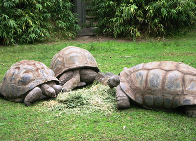 オーストラリア・メルボルンのメルボルン動物園