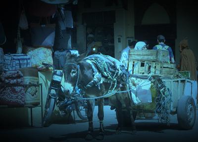 モロッコ 狭い路地を行き交うロバ