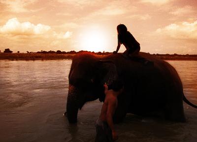 ネパール/象に乗って野生動物を探せ!