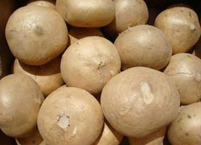 ジャガイモとカブを合わせた様なもの「jicama」