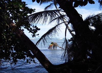 ワイルドなカリブ海