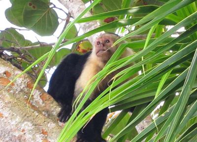 尻尾が長く、白い毛の猿