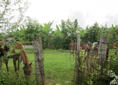 馬がまだまだ日常的な交通手段